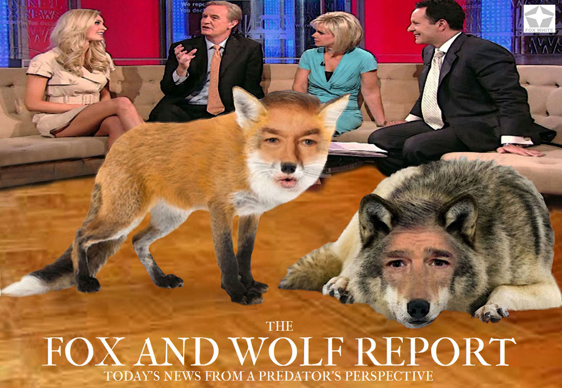 THE FOX AND WOLF REPORT
