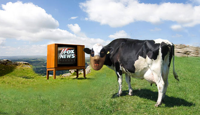 Mad cow caused by channel change!